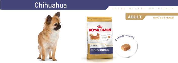 care for adult chihuahua